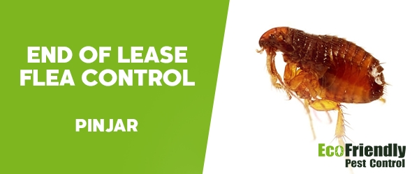 End of Lease Flea Control  Pinjar