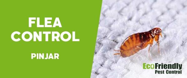 Fleas Control  Pinjar