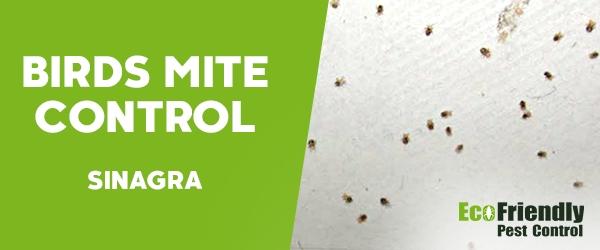 Bird Mite Control Sinagra
