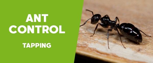 Ant Control Tapping