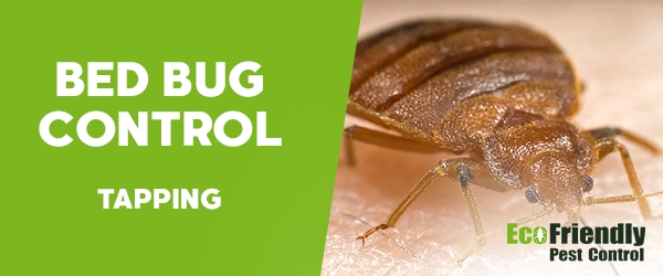 Bed Bug Control Tapping