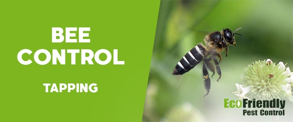 Bee Control Tapping