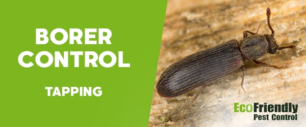 Borer Control Tapping