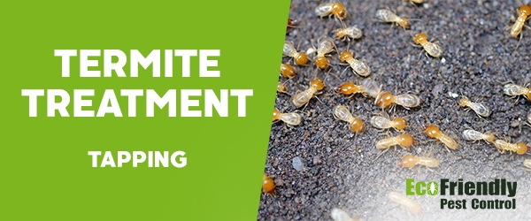 Termite Control Tapping