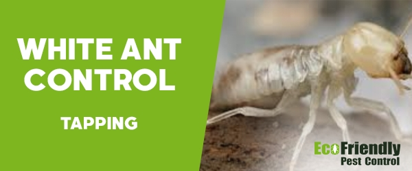White Ant Control Tapping