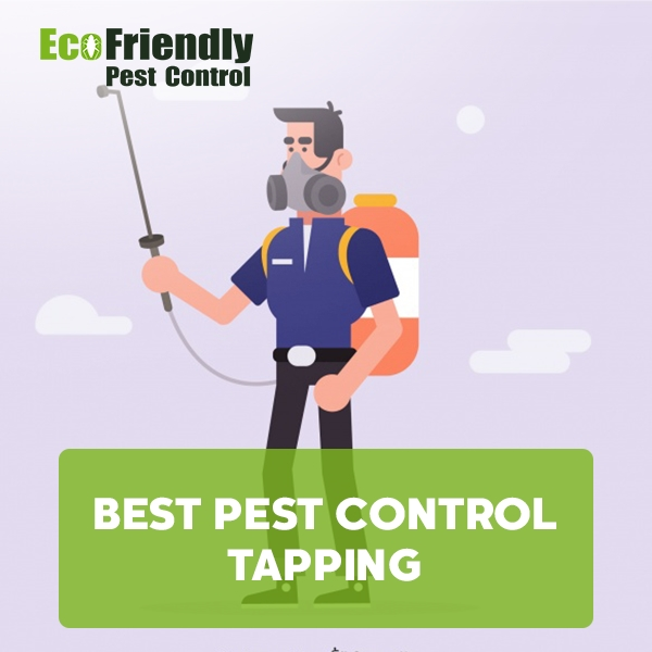 Best Pest Control Tapping