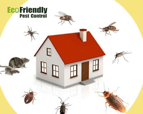 Pest Control Tapping