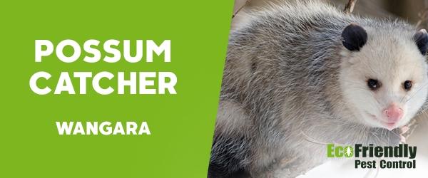 Possum Catcher  Wangara