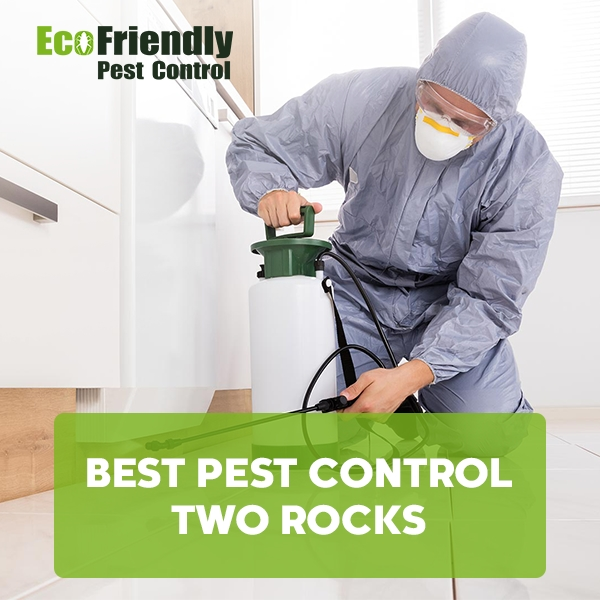 Best Pest Control Two Rocks
