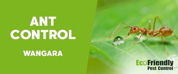 Ant Control  Wangara