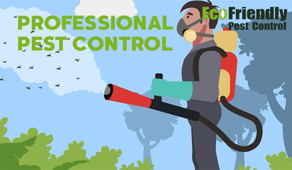 Pest Control Haynes