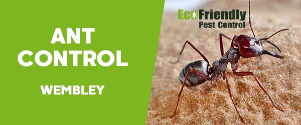 Ant Control Wembley