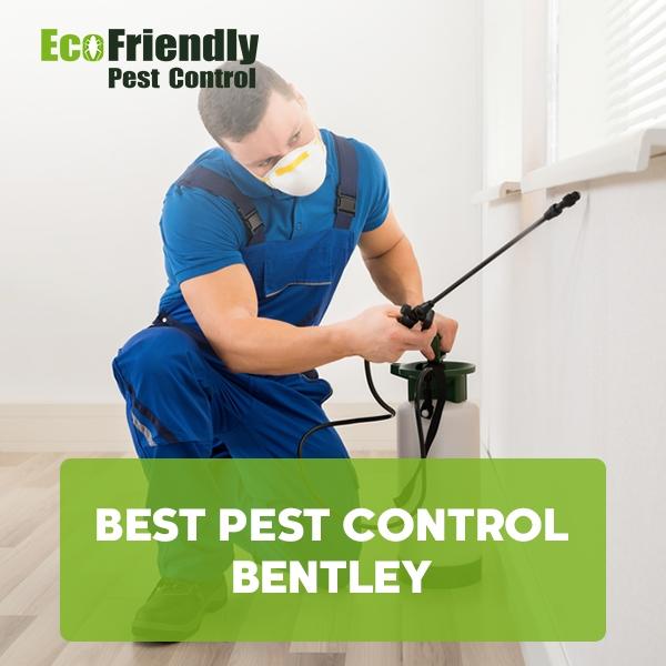 Best Pest Control Bentley