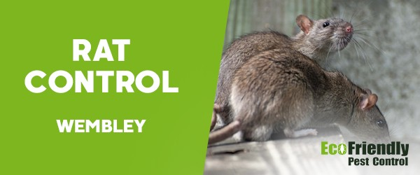 Rat Pest Control Wembley