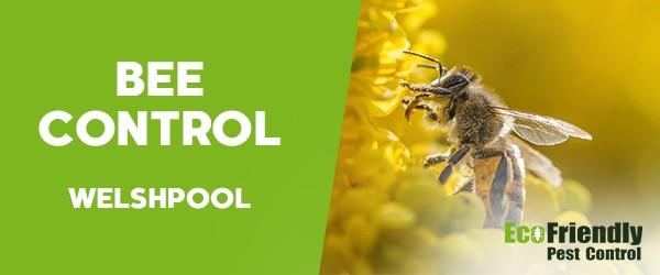Bee Control Welshpool