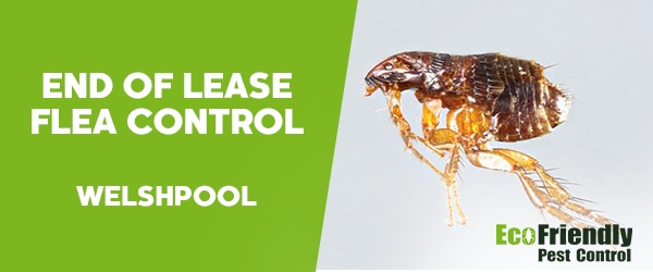 End of Lease Flea Control Welshpool