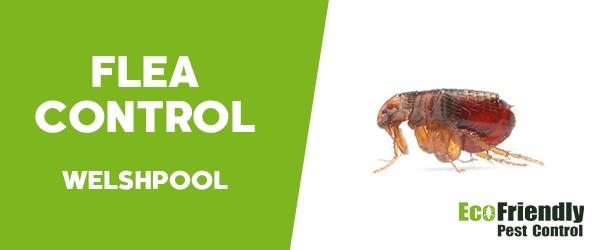 Fleas Control Welshpool