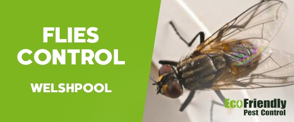 Flies Control Welshpool