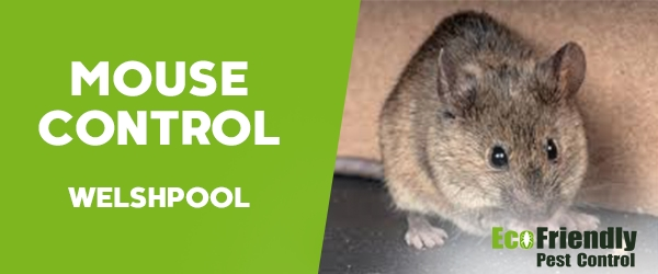 Mouse Control Welshpool