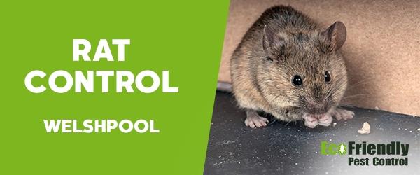 Rat Pest Control Welshpool