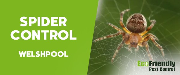 Spider Control Welshpool