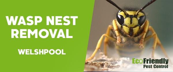 Wasp Nest Remvoal Welshpool