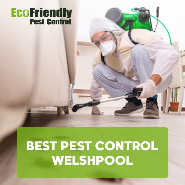 Best Pest Control Welshpool