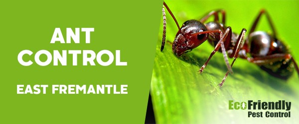 Ant Control East Fremantle