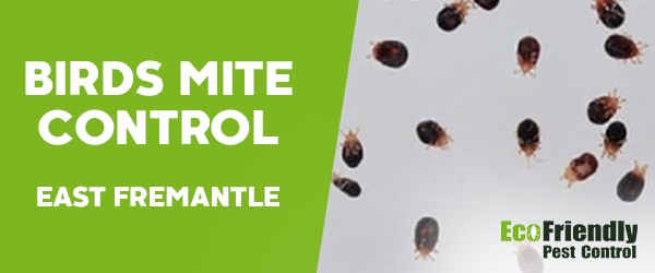 Bird Mite Control East Fremantle