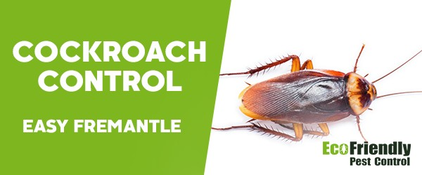Cockroach Control East Fremantle