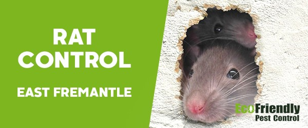 Rat Pest Control East Fremantle
