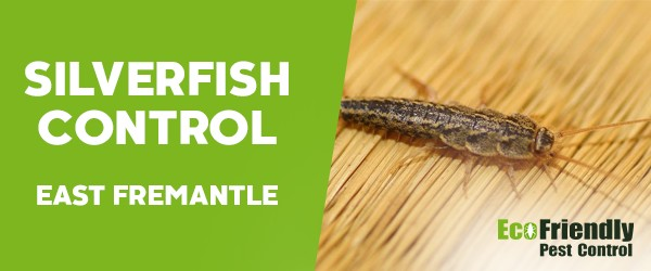 Silverfish Control East Fremantle