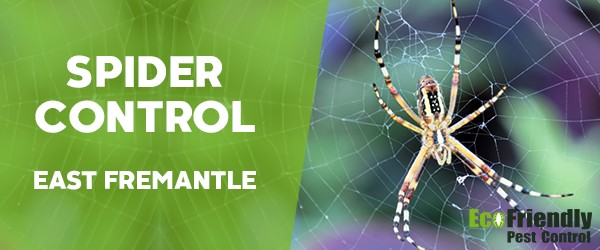 Spider Control East Fremantle