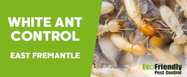White Ant Control East Fremantle
