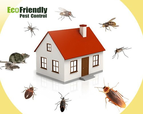 Pest Control East Fremantle