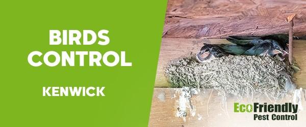 Birds Control  Kenwick