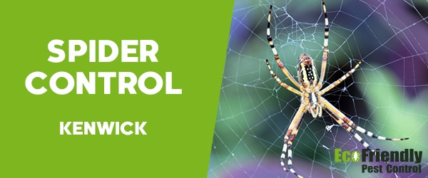 Spider Control  Kenwick