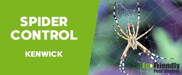 Spider Control  Kenwick