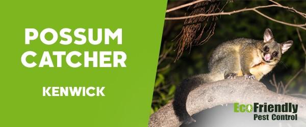 Possum Catcher  Kenwick
