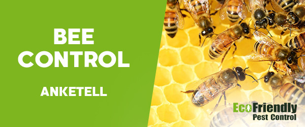Bee Control Anketell