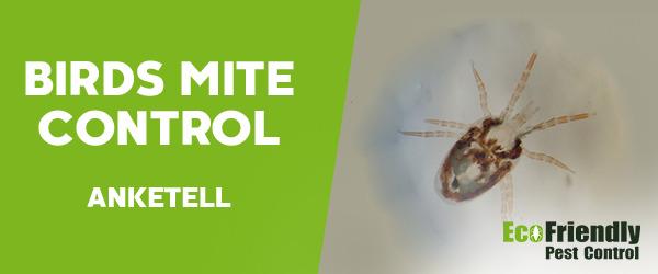 Bird Mite Control Anketell