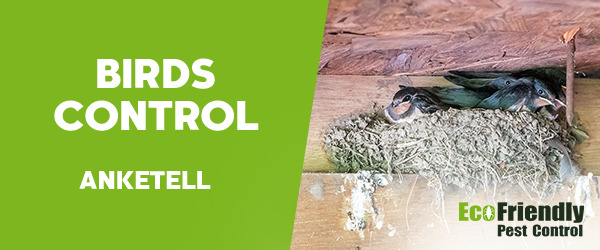 Birds Control Anketell