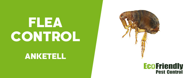 Fleas Control Anketell