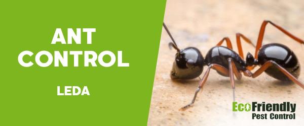 Ant Control Leda