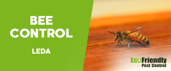 Bee Control Leda