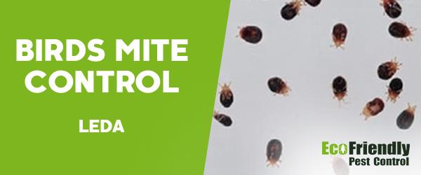 Bird Mite Control Leda