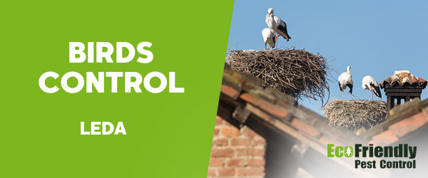 Birds Control Leda