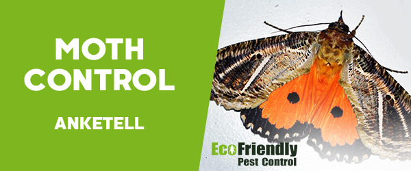 Moth Control Anketell