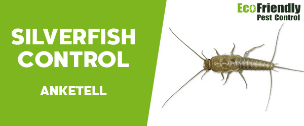 Silverfish Control Anketell