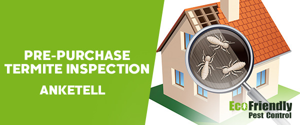 Pre-purchase Termite Inspection Anketell